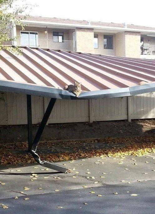 un chat courageux ou complètement inconscient