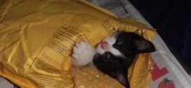Un chaton «prêt à poster»