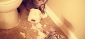 Chats jouant avec du papier toilette