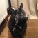 Un chat fait le ménage