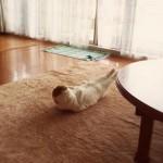 un chat fait des abdos