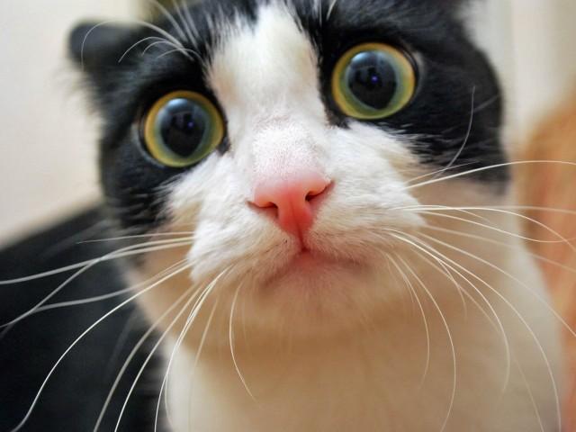 chat-qui-a-peur-165365_640x480