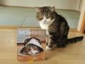 moi-maru-chat-enrobe-2