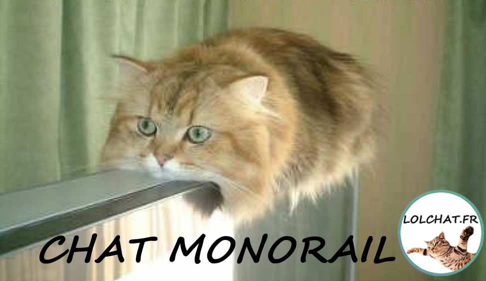 Le chat monorail