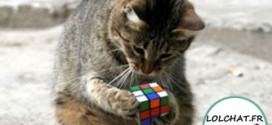 Chat et Rubik's Cube : les doigts dans le nez