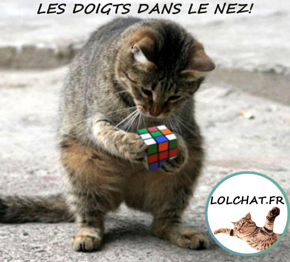 Chat et Rubik's Cube