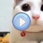 Compilation vidéo n°1 - Chats drôles