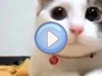 Compilation vidéo n°1 – Chats drôles