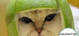 Chat et casque citron !