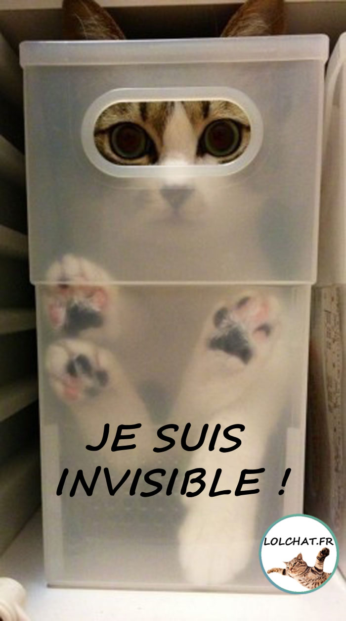 Chat invisible caché