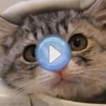 Le chaton qui prend son premier bain dans une tasse