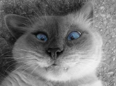 Le chat bizarre inclassable