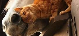 Chat et Cheval : une belle amitié