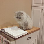Le chat qui sait lire