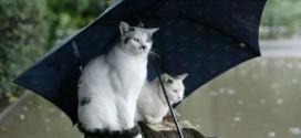 Chats sous un parapluie