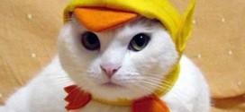 Chat déguisé en poussin