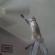 Le chat qui n'a peur de rien : il grimpe sur l'escabeau et attrape le ventilateur