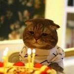 Chat malheureux pour son anniversaire