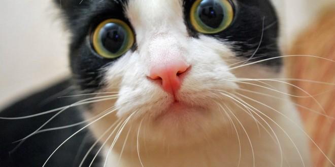 Le chat effrayé : grosse peur pour lui !