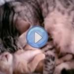Vidéo : L'amour d'une maman chat à son petit chaton