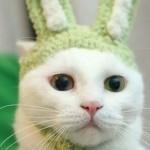 Chat déguisé en lapin