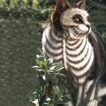 Chat déguisé en squelette pour Halloween !