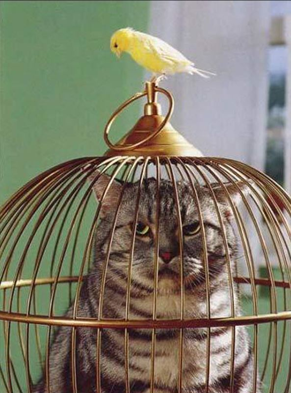 Un chat enfermé dans la cage de l'oiseau