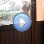 Vidéo : le chat qui sait ouvrir les portes