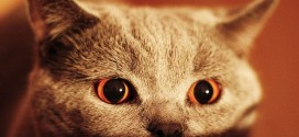 Un chat possédé aux yeux effrayants