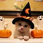 Chaton et chapeau de sorcière