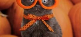 Chaton avec lunettes et une citrouille sur la tête