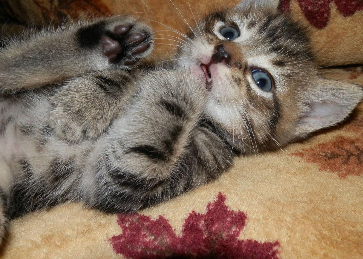 Un petit chaton très effrayé