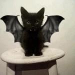Le chaton noir vampire