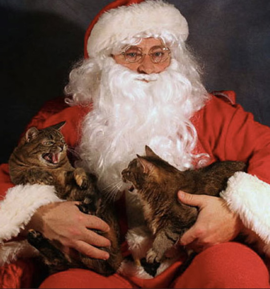 Deux chats qui se bagarrent sur le père Noël