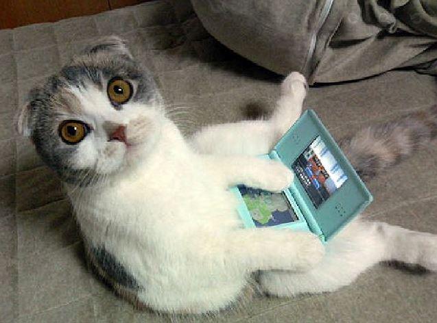 Un chat Scottish Fold qui joue à la console