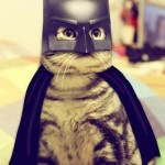 Le chat Batman