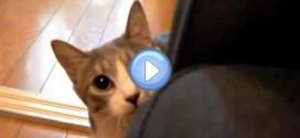 Vidéo du chat Agent Secret