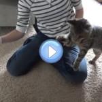 Vidéo d'un chat boxeur qui se bat contre un sèche-cheveux