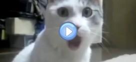 """Vidéo du chat """"Oh My God"""""""