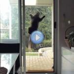 Vidéo du chat ventouse - Mission impossible