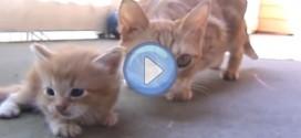 Vidéo d'un chaton qui se fait sauver par sa mère