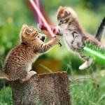 Deux chatons avec des sabres lasers - Star Wars