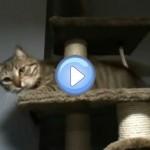 Vidéo du chat qui devient tout fou sur son arbre à chat : Mamaw le retour !