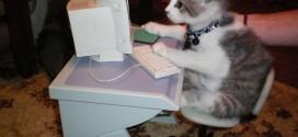 Le chaton derrière un ordinateur : un vrai geek