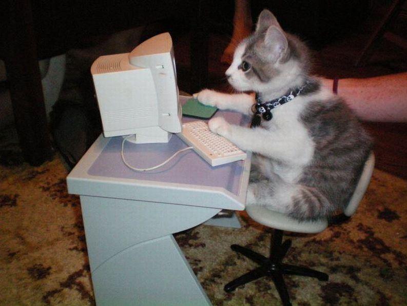 Le chat derrière un ordinateur : un vrai geek