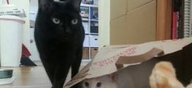 Le chat espion qui joue à cache-cache