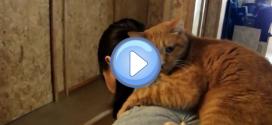 Vidéo du chat qui reste toute la journée sur le dos de sa maîtresse