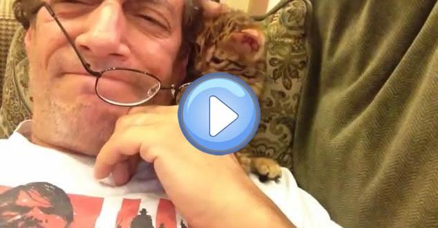 Vidéo du chaton bengal qui joue avec les lunettes de son maître
