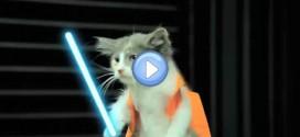 Vidéo : L'empire Contre Attaque version Lol Chats – Star Wars