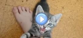 Vidéo de Scout, le chaton tout fou !